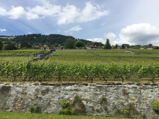 vineyard-terraces